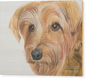 Yorkshire Terrier Face Wood Print by Kate Sumners