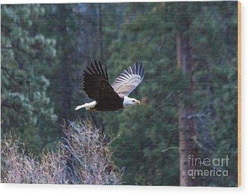 Yosemite Bald Eagle Wood Print