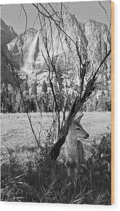 Yosemite Falls And Fawn Wood Print