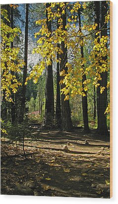 Wood Print featuring the photograph Yosemite Fen Way by John Haldane