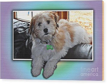 Yoshi Havanese Puppy Wood Print by Barbara Griffin