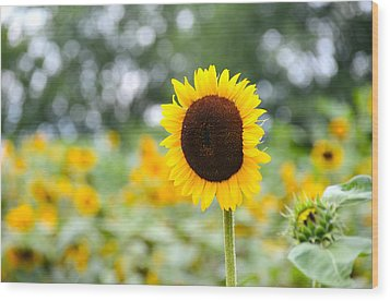 Wood Print featuring the photograph You Are My Sonshine by Linda Mishler