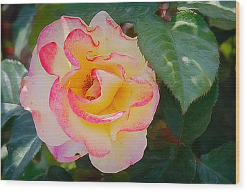 You Love The Roses - So Do I Wood Print by Christine Till