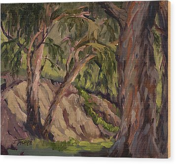 Young And Old Eucalyptus Wood Print by Jane Thorpe