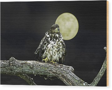 Wood Print featuring the photograph Young Bald Eagle By Moon Light by John Haldane