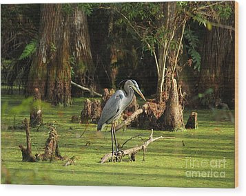 Young Blue Heron Wood Print by Theresa Willingham
