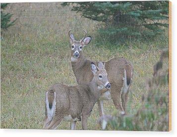 Young Bucks Wood Print by Sandra Updyke