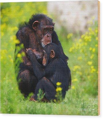 Young Chimpanzee With Adult - II Wood Print