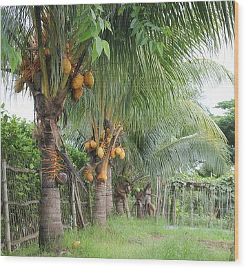Wood Print featuring the photograph Young Coconut Trees by Cyril Maza
