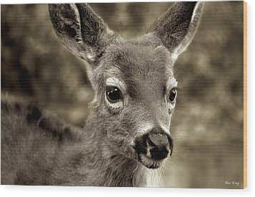 Young Curious Deer Wood Print