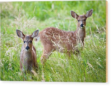Young Deer Wood Print by Crystal Hoeveler