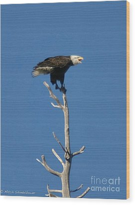 Wood Print featuring the photograph Young Eagle by Mitch Shindelbower
