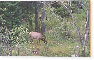 Wood Print featuring the photograph Young Elk Grazing by Fortunate Findings Shirley Dickerson