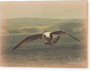 Wood Print featuring the photograph Young Gull by Linsey Williams