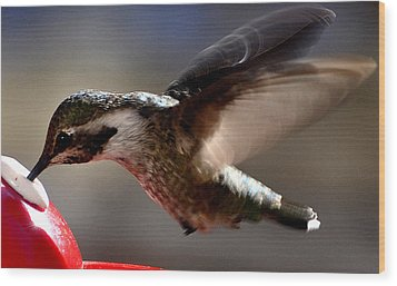 Wood Print featuring the photograph Young Hummingbird Male Anna by Jay Milo