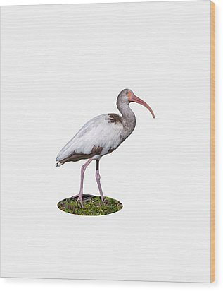 Wood Print featuring the photograph Young Ibis Gazing Upwards by John M Bailey