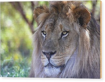 Young King In The Morning Wood Print by Ruth Jolly