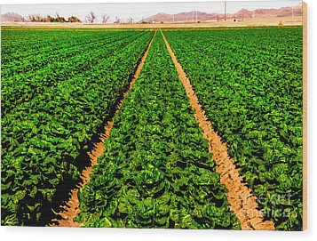 Young Lettuce Wood Print by Robert Bales