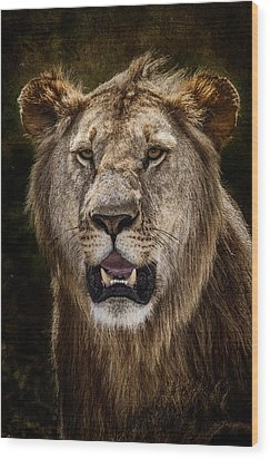 Young Male Lion Texture Blend Wood Print by Mike Gaudaur