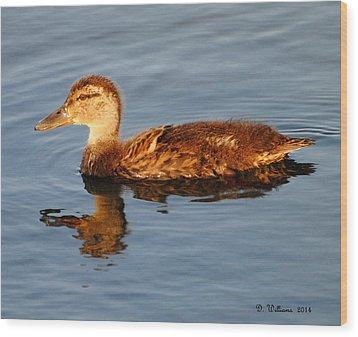 Young Mallard Hen At Ocracoke Wood Print