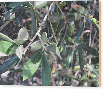 Young Olives Wood Print by Pema Hou