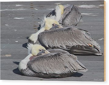 Young Pelicans Wood Print by Heidi Smith