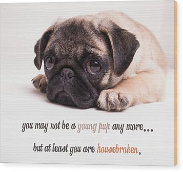 Young Pup Wood Print by Edward Fielding