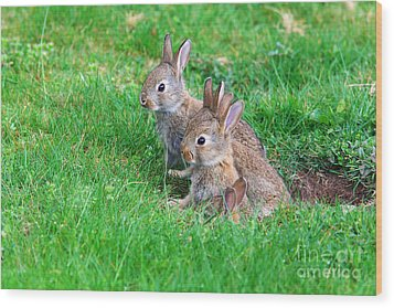 Wood Print featuring the photograph Young Rabbits by Nick  Biemans