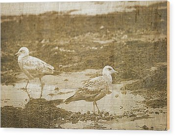 Young Seagulls On Harwich Cape Cod Beach Wood Print by Suzanne Powers