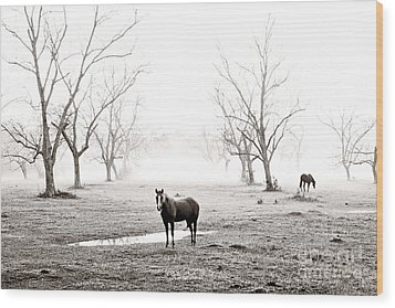Your Morning Joe Wood Print by Scott Pellegrin
