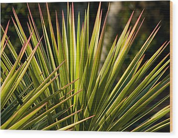 Yucca 1 Wood Print by Frank Tozier