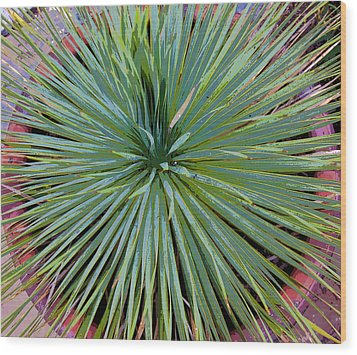 Yucca 2 Wood Print by Frank Tozier