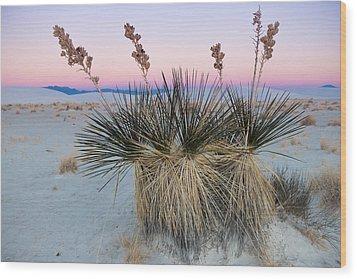 Yucca Dawn Wood Print by Roger Clifford