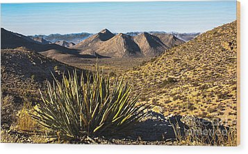 Yucca In High Deaert Wood Print by Robert Bales