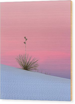Wood Print featuring the photograph Yucca On Pink And White by Kristal Kraft