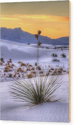 Wood Print featuring the photograph Yucca On White Sand by Kristal Kraft