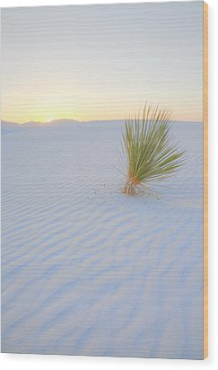Wood Print featuring the photograph Yucca Plant At White Sands by Alan Vance Ley