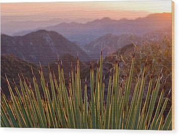 Yucca Spikes Wood Print by Adam Pender