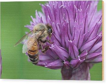 Yummm Chive Nectar Wood Print