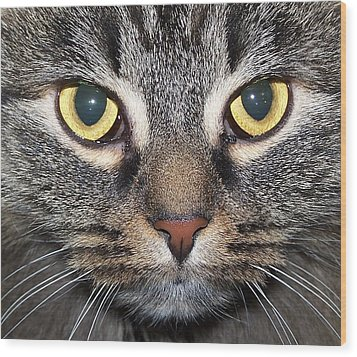Yummy Cat Eyes Wood Print