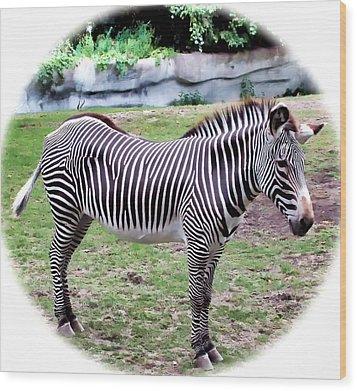 Wood Print featuring the photograph Zebra 1 by Dawn Eshelman