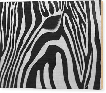 Zebra 13 Wood Print by Jane Biven