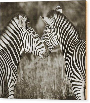 Wood Print featuring the photograph Zebra Affection by Liz Leyden