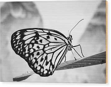 Zebra Butterfly Wood Print