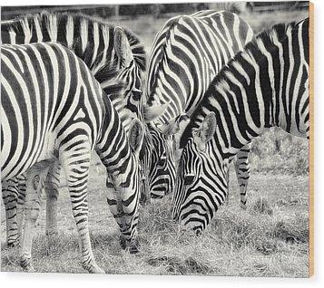 Zebra Dinner Time   Wood Print by Raymond Earley