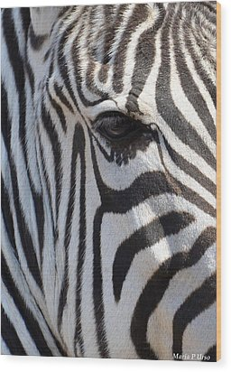 Zebra Eye Abstract Wood Print by Maria Urso