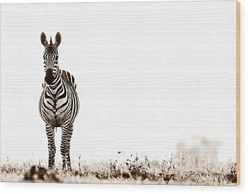 Zebra Facing Forward Washed Out Sky Bw Wood Print