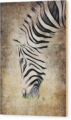 Zebra Fade Wood Print by Steve McKinzie