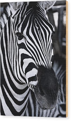 Zebra Wood Print by Goyo Ambrosio