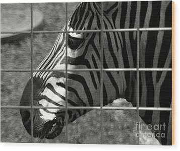 Wood Print featuring the photograph Zebra Grid by Tom Brickhouse